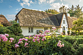 Historic thatched courtyard in Keitum, Sylt, Schleswig-Holstein, Germany