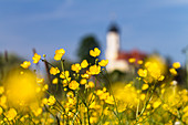 Flower meadow with buttercups, Ranunculus acris, church, chapel, Upper Bavaria, Germany, Europe