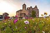 Blumenwiese vor Burg Cadolzburg im Abendlicht, Cadolzburg, Franken, Bayern, Deutschland