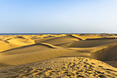 View of wide landscape of the dunes of Maspalomas in the evening light, Gran Canaria, Spain