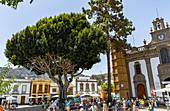 """Large old tree in front of Basílica de Nuestra Señora del Pino - Church on the market square of """"Teror"""", Gran Canaria, Spain"""