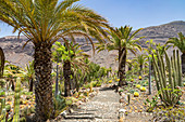 """Cactus plants and palm trees in the """"Cactualdea Park"""" - cactus park in the west of Gran Canaria, Spain"""