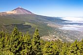 Corona Forestal - Nadelwald auf dem Weg in Teide Nationalpark mit Blick auf Vulkan, Teneriffa, Spanien