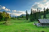 Traditionelle Alm auf kuppiger Wiese, am Ristfeuchthorn, Chiemgauer Alpen, Chiemgau, Oberbayern, Bayern, Deutschland