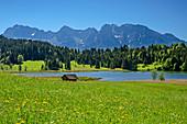 Blumenwiese mit Geroldsee und Karwendel im Hintergrund, Werdenfelser Land, Bayerische Alpen, Oberbayern, Bayern, Deutschland