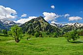 Wiese mit Bergahorn, Giebel, Schochen und Seeköpfe im Hintergrund, Hintersteiner Tal, Allgäuer Alpen, Allgäu, Schwaben, Bayern, Deutschland