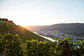 Sunrise in the vineyards on the Moselle in Winningen, Rhineland Palatinate Germany.
