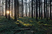 Sunrise in the Westerwald, Rhineland Palatinate.