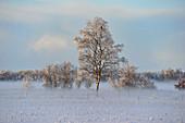 Winterstimmung mit Nebel, Geestland, Landkreis Cuxhaven, Niedersachsen, Deutschland