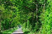 Ein kleiner Feldweg führt in das Moor, bei Geestland, Landkreis Cuxhaven, Niedersachsen, Deutschland