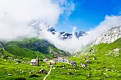 Sunlight filters between fog at the pasture of Meglisalp ,Canton of Appenzell, Alpstein, Switzerland, Europe