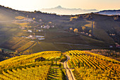 Road between vineyard with the Monviso peak in the background. Serralunga d'Alba, Langhe, Piedmont, Italy, Europe.