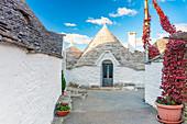 Traditional trullo house. Unesco World Heritage Site, Alberobello, Province of Bari, Apulia, Italy, Europe.