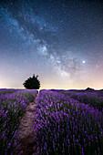 Lavanda and Milky Way in Langhe, Sale San Giovanni, Piedmont, Italy