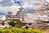 Blühende japanische Kirschbäume (Sakura) im Schlosspark von Himeji, Himeji, Japan