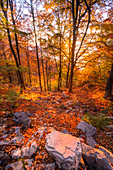 The colours of a forest during autumn at sunset. Lecco, Valsassina, Lombardy, Italy