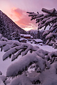 Snowcapped Pontela huts between trees during winter season at sunrise. Rezzalo valley, SOndalo, Sondrio district, Valtellina, Alps, Lombardy, Italy, Europe.