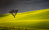 Marche's countryside, Morrovalle village, Macerata district, Marche, Italy