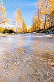 Erster Frost, Alpe Veglia, Naturpark Alpe Veglia und Alpe Devero, Ossola, Provinz Verbano-Cusio-Ossola, Piemont, Italienische Alpen, Italien