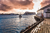 Fishing boat move by the port of rost island, Lofoten Islands, Norway