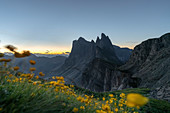 Seceda peaks at dawn with Globeflowers in the foreground. Ortisei, Bolzano province, Trentino Alto Adige, Italy.