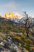 Fitz Roy range peaks with tree in autumnal landscape at dawn. El Chalten, Santa Cruz province, Argentina.