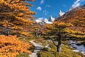 Autumn scenery along the trail to Laguna Sucia, with Fitz Roy in the background. El Chalten, Santa Cruz province, Argentina.