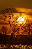 Sonnenuntergang in Ostholstein, Schleswig-Holstein, Deutschland