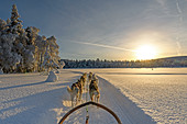 Dog sledding in Lapland, Arvidsjaur, Auktsjaur, Sweden