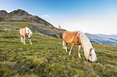 a view of the Sarntal Alps where horses graze free and with the Latzfonser Kreuz Churchhouse in the background, Bolzano province, South Tyrol, Trentino Alto Adige, Italy