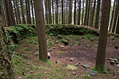 United Kingdom, Northern Ireland, County Down, Bryansford, the verdant and vibrant Tollymore Forest Park is where Theon is stalked by Ramsay Snow, and has been used to depict the snow-covered lands between Winterfell and the Wall