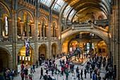 England, London, South Kensington, Natural History Museum, interior