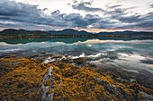 SEAWEED AND TURQUOISE WATER AT SUNSET OVER THE VESTERALEN ISLANDS, EVENES, NORWAY