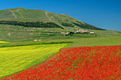 Blooming poppy and rapeseed field, Castelluccio in the background, Sibillini Mountains, Monti Sibillini, Monti Sibillini National Park, Parco nazionale dei Monti Sibillini, Apennines, Marche, Umbria, Italy