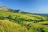 Offenes Wiesengelände mit Obstbäumen, Grande Anello dei Sibillini, Sibillinische Berge, Monti Sibillini, Nationalpark Monti Sibillini, Parco nazionale dei Monti Sibillini, Apennin, Marken, Umbrien, Italien