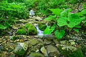 Small stream flows over mossy stones, Grande Anello dei Sibillini, Sibillini Mountains, Monti Sibillini, National Park Monti Sibillini, Parco nazionale dei Monti Sibillini, Apennines, Marche, Umbria, Italy