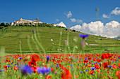 Blooming poppy and cornflower field with Castelluccio in the background, Castelluccio, Sibillini Mountains, Monti Sibillini, National Park Monti Sibillini, Parco nazionale dei Monti Sibillini, Apennines, Marche, Umbria, Italy