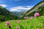 Alpine meadow and buildings of the Gadenalpe, Großes Walsertal Biosphere Reserve, Lechquellen Mountains, Vorarlberg, Austria
