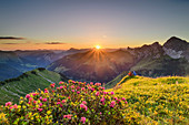 Man and woman while hiking sit on meadow ledge and enjoy sunrise over Allgäu Alps and Lechquellen Mountains, with alpine roses in the foreground, from Zafernhorn, Großes Walsertal Biosphere Reserve, Bregenz Forest Mountains, Bregenzerwald, Vorarlberg, Austria