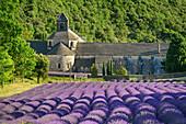 Kloster Senanque mit blühendem Lavendelfeld im Vordergrund, Notre-Dame de Senanque, Abbaye Senanque, Vaucluse, Provence-Alpes-Côte d´Azur, Frankreich