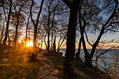 Sunset in the forest on the steep coast, Weissenhäuser Strand, Eitz, Baltic Sea, Ostholstein, Schleswig-Holstein, Germany