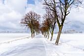Winterliche Allee mit Schnee in Ostholstein, Neukirchen, Schleswig-Holstein, Deutschland