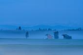 Nebelmorgen im Weilheimer Moos, Weilheim, Bayern, Deutschland