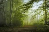 Waldweg in einem Laubwald am Morgen, Wald in Bayern, Deutschland
