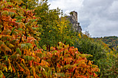 View of Neideck ruin with colorful autumn leaves in the foreground, Streitberg, Upper Franconia, Bavaria, Germany