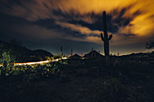 Cacti at night in Saguaro National Park, Tucson, Arizona, USA, North America