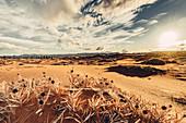 Sunset in desert landscape, Utah, USA, North America