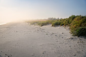 Back light with fog at the beach at the three countries corner, Fischland-Darß-Zingst, Western Pomerania Lagoon Area National Park, peninsula in Mecklenburg-Western Pomerania, Baltic Sea, Germany, Europe