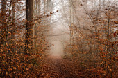 Morning mist in autumnal beech forest, Bavaria, Germany