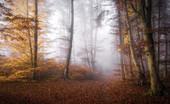 Morgennebel im herbstlichen Buchenwald, Wald in Bayern, Deutschland